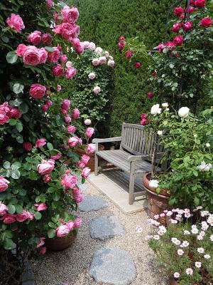 庭はバラでいっぱい
