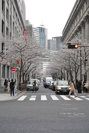 江戸桜通りの桜