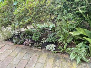 自宅の庭のシェードガーデン